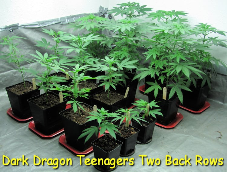 dark-dragon-teenagers-back-two-rows