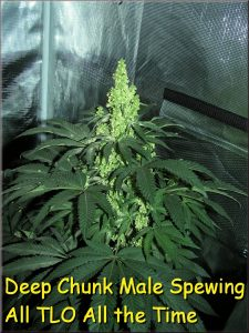 deep-chunk-male-nov-2016
